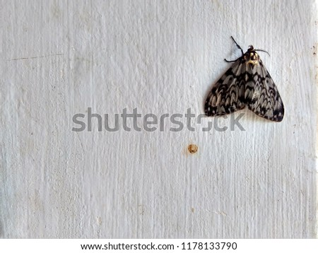 moth on the wall #1178133790