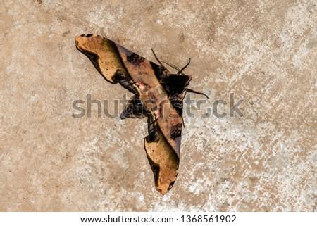 moth on tree bark, beautiful photo digital picture