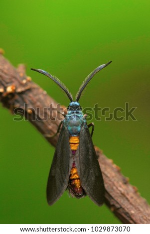 Moth , Unidentified , Aarey Milk Colony , INDIA