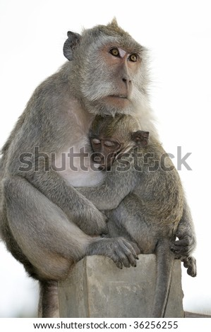 Mother and baby monkey - stock photo