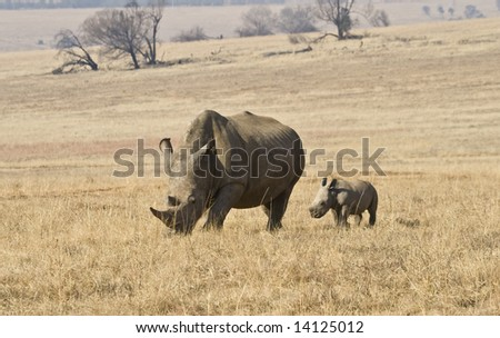 Mother and baby Rhino in the bush