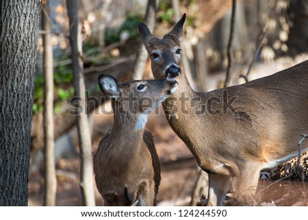 Mother and child deer in the forest - Winter season