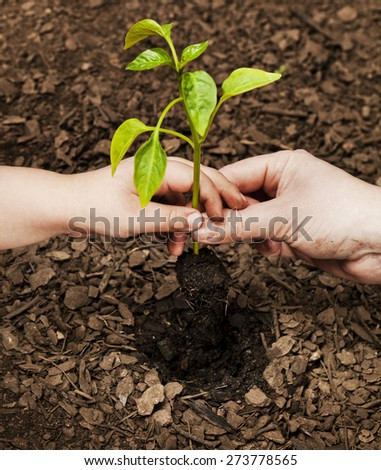 Mother and child planting seedling Environment and nature protection concepts