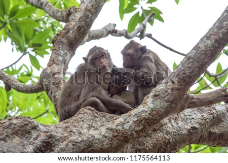 Mother and father monkey with her cute baby with forest in background.It is a family of monkeys.Love of monkeys.The coexistence of monkeys in the wild.  #1175564113