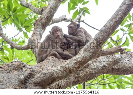 Mother and father monkey with her cute baby with forest in background.It is a family of monkeys.Love of monkeys.The coexistence of monkeys in the wild. #1175564116