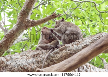 Mother and father monkey with her cute baby with forest in background.It is a family of monkeys.Love of monkeys.The coexistence of monkeys in the wild.  #1175564119