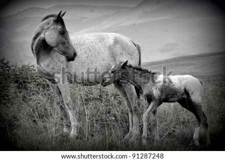 Mother and Foal in black and white