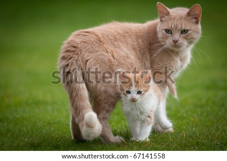 Mother and son cat