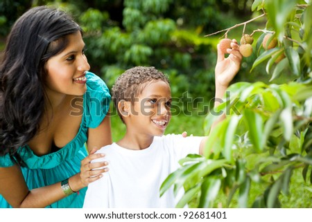 mother and son picking litchis in litchi orchard