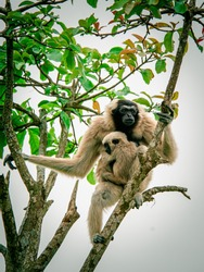 mother ape and baby ape live in the forest