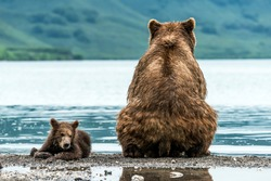 Mother bear with cub on the beach