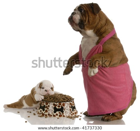 mother bulldog wearing pink dress standing beside puppy with full bowl of dog food