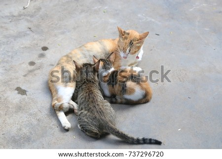 mother cat breastfeeding her child #737296720
