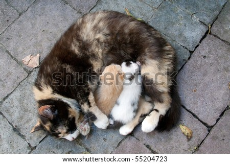 Mother cat feeding two kittens