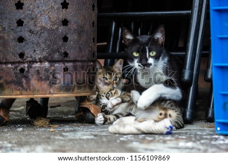 Mother cat playing with kitten