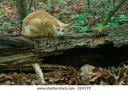 Mother Cat Watching Over Newborn Kittens in the Woods - 1