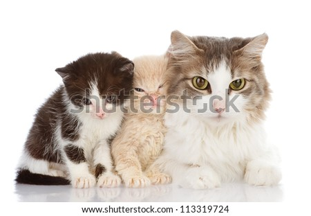 Mother cat with her kittens. isolated on white background