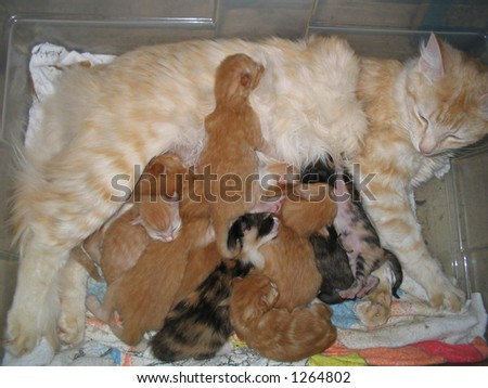 Mother Cat With Ten Baby Kittens