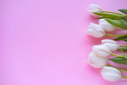 Mother day .Flowers.White tulips on pink background.