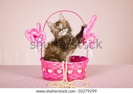 Mother Day gift Maine Coon kitten in pink heart basket with string of pearls