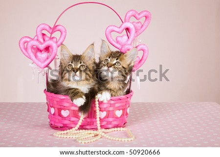 Mother Day gift Maine Coon kittens in pink heart basket with string of pearls