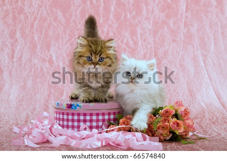 Mother Day Valentine kittens with roses flowers