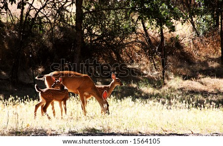Mother Doe and Twin Fawns