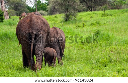 Mother Elephant with Juvenile and Baby Elephants Serengeti Tanzania East Africa