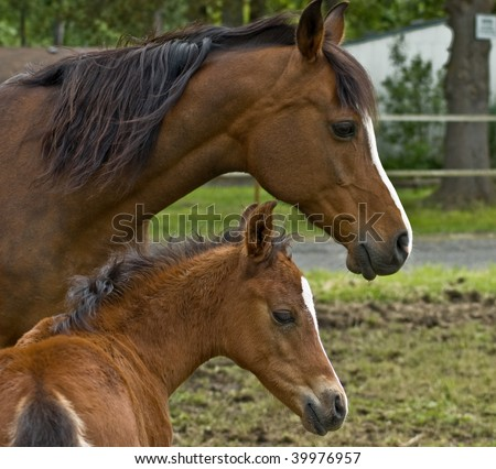 Mother horse and her baby colt