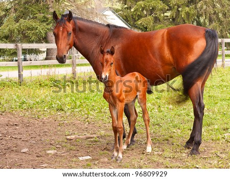 Mother horse with her foal staring at camera.