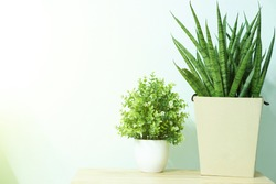 mother-in-law's tongue or snake plant and small bush on wooden table,This plant can purify the air and therefore suitable for planting in the bedroom.