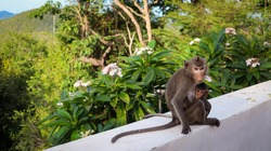 Mother Monkey Feeding her Baby and showing emotions. Adult monkey taking care of baby. Love care maternity concept.