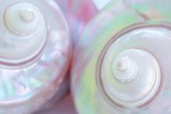 Mother of pearl sea shells close up background