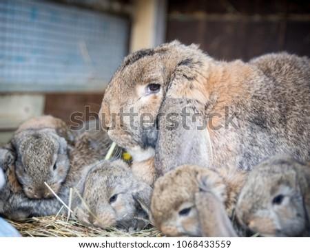 Mother rabbit and her little bunnies relaxing in garden #1068433559