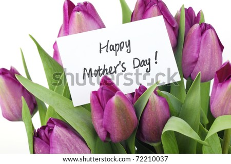 Mother's Day Concept-- Purple tulips with card on white background - stock photo