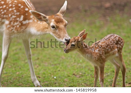 mother's love  deer and cute...