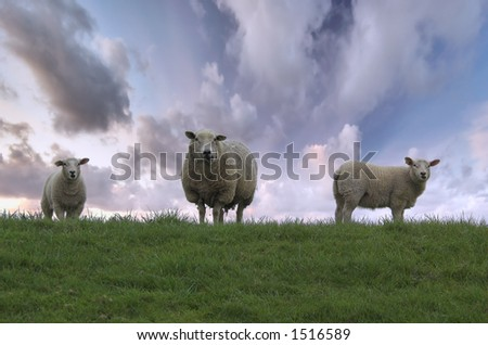 Mother Sheep and Her Two Lambs