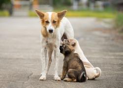 Mother slag dog feeding her puppies on street, homeless dog living on road