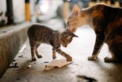 Mother street cat licking kitten while it played with rubbish