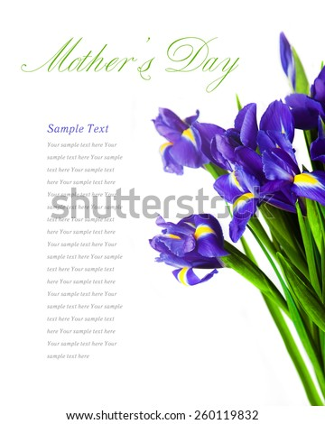 Mothers day. Iris Spring Flowers Art Design. Woman day. women\'s day. Celebration summer flowers. Congratulation. Card. Blue flowers