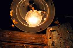 Moths and butterflies fly into the light of an electric lamp