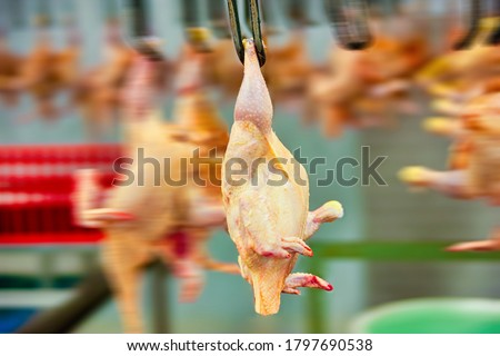 motion blur of a abattoir, slaughter house conveyor belt line for chickens. Сток-фото ©