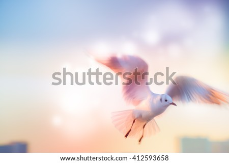 Motion Blur of Dove fly in the air with wings wide over building, peace and freedom over big city concept
