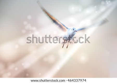 Motion Blur of Dove fly in the air with wings wide,ray of peace and freedom concept. #464337974