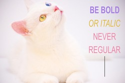 motivational inspirational positive life quote be bold or italic never regular with the cat and white background