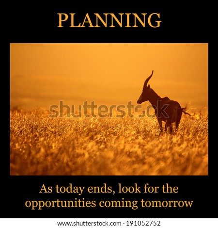 Motivational poster PLANNING orange sunset with blesbuck standing in grass