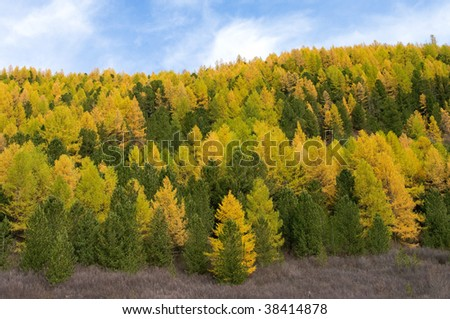 Motley trees of autumn forest