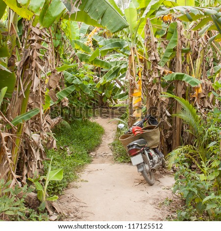 Motorcycle in the jungle