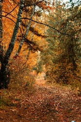 Motorcycle on an old road in the forest. Autumn landscape with colorful fall foliage trees. Beautiful autumn trail.