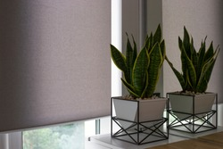 Motorized roller shades. Automatic blinds on the window. A houseplant in a modern pot stands on the bedside wooden table next to roller shades. Roller blinds are made from texture material.
